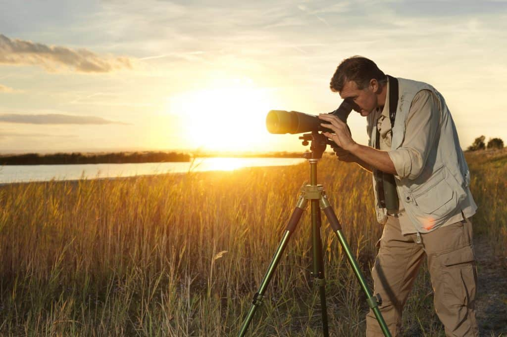 Birdwatching / Vogelbeobachtung im Nationalpark Neusiedler See - Seewinkel